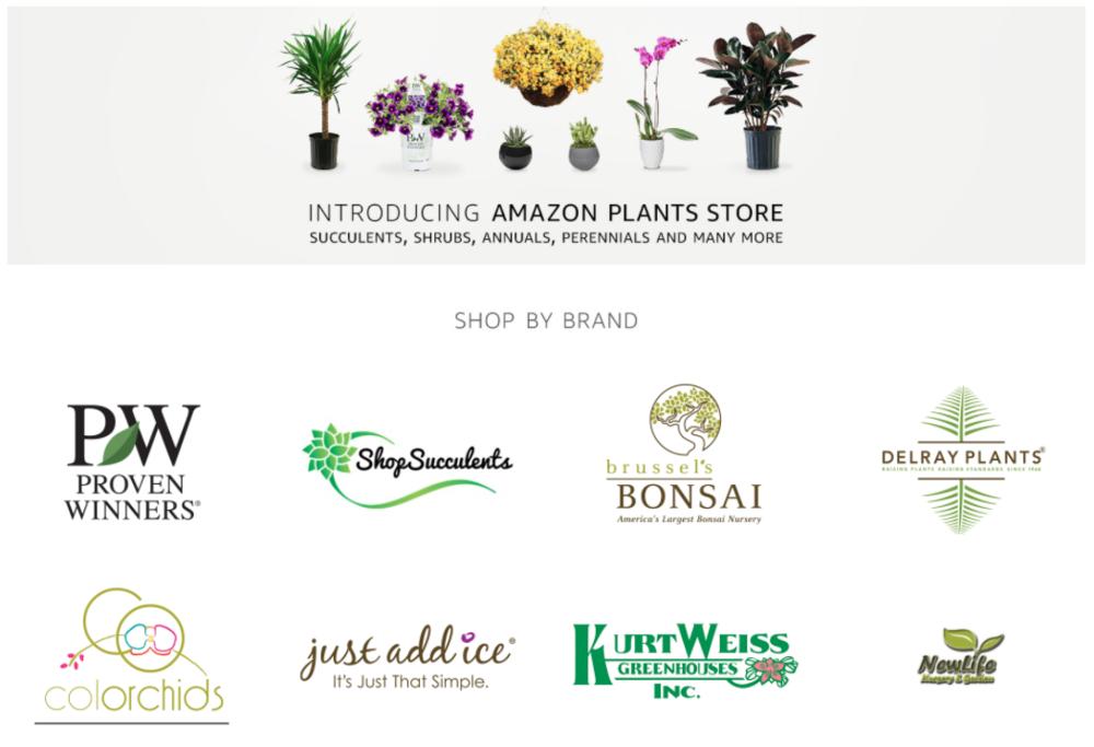 amazon plant store